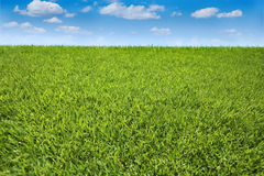 Green Grass and Blue Sky in the Summer Day Royalty Free Stock Photo