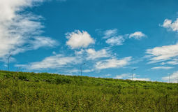 Green grass and blue sky. In sunny day Royalty Free Stock Images