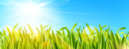 Green grass and blue sky. Vector. Green grass and blue sky with sun. Vector illustration Royalty Free Stock Photography