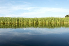Green grass with blue sky and water Stock Photos