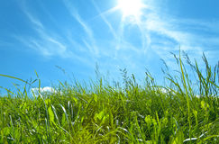 Green Grass With Blue Sky And White Royalty Free Stock Images