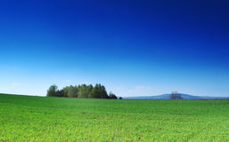 Green grass, the blue sky and white clouds Royalty Free Stock Images