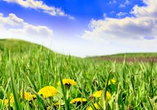 Green grass, the blue sky and white clouds Royalty Free Stock Image