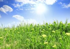 Green grass, the blue sky and white clouds Royalty Free Stock Photography