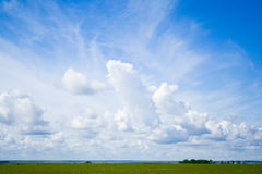 Green grass, the blue sky and white clouds. Outdoor stock images