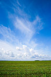 Green grass, the blue sky and white clouds. Outdoor stock image