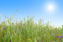 Green grass with blue sunny sky Royalty Free Stock Photos