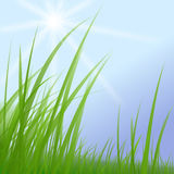 Green grass on blue sunny sky Stock Images
