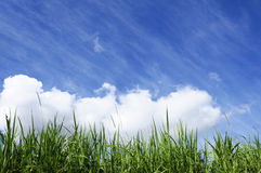 Green Grass With Blue Sunny Sky stock images