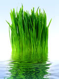 Green grass in the blue water Royalty Free Stock Photography