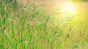 Green grass. On blure background stock image