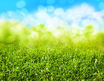 Green grass blurred background Royalty Free Stock Photos