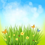 Green grass on a blurred background of nature. Nice shiny fresh daisy chamomile butterfly flower grass lawn with bokeh blur effect sunshine beam background Stock Photo