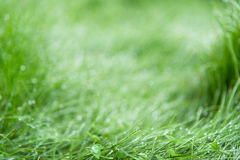 Green grass blurred background Royalty Free Stock Photo