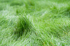 Green grass blurred background Royalty Free Stock Photography