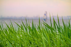 Green grass with a blurried unfocused windserfer sailing away on sunset. Vacation conception Stock Images