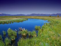 Green Grass and Body of Water Royalty Free Stock Photos