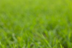 Green grass bokeh Royalty Free Stock Photography