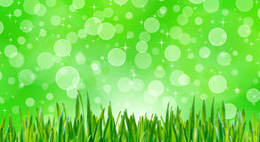 Green grass with bokeh background Royalty Free Stock Image
