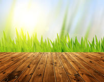 Green grass and bokeh background Stock Photography