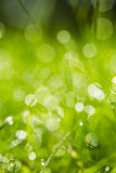 Green grass with bokeh Royalty Free Stock Image
