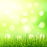 Green grass on bokeh light effect background Stock Photos