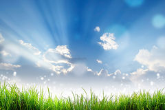 Green Grass and bokeh light sun and cloud sky Royalty Free Stock Images