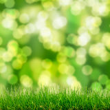 Green grass and bokeh lights Stock Images