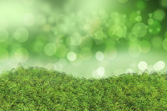Green grass on a bokeh lights background Stock Photos