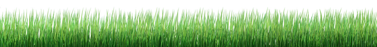 Green grass border Royalty Free Stock Photography