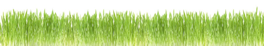 Green grass border Stock Photography