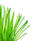 Green grass border Stock Images