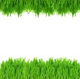 Green grass border Stock Photography