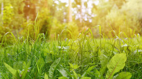 Green Grass Border as Natural Background at Sunny Summer Day Stock Image