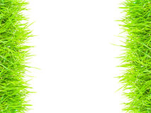Green grass  border for background Stock Image