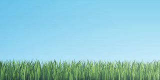 Green grass border on blue sky background. 3d illustration. Green grass border on blue sky background, 3d illustration Stock Photos