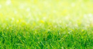 Green Grass Border With Defocused Natural Background. At Sunny Summer Day Stock Photography