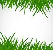 Green grass border illustration design Royalty Free Stock Images