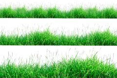 Green Grass Border isolated on white background. The collection of grass.Manila GrassThe grass is native to Thailand is very popular in the front yard royalty free stock photos