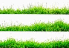 Green Grass Border isolated on white background. The collection of grass.Manila GrassThe grass is native to Thailand is very popular in the front yard stock images
