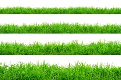 Green Grass Border isolated on white background. The collection of grass.Manila GrassThe grass is native to Thailand is very popular in the front yard stock photography