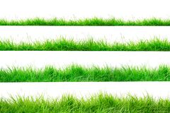 Green Grass Border isolated on white background. The collection of grass.Manila GrassThe grass is native to Thailand is very popular in the front yard stock image
