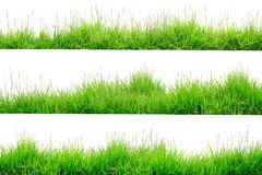Green Grass Border isolated on white background. The collection of grass.Manila GrassThe grass is native to Thailand is very popular in the front yard royalty free stock image