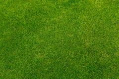 Green Grass Border. Manila GrassThe grass is native to Thailand is very popular in the front yard royalty free stock images