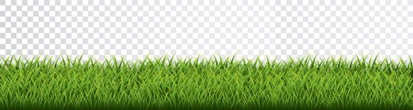 Free Green Grass Border Set On Transparent Background. Vector Illustration Stock Image - 147898111