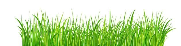 Green Grass Border, Vector Illustration vector illustration