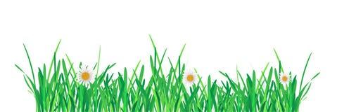 Green Grass Border. Vector Illustration for you design Stock Photography
