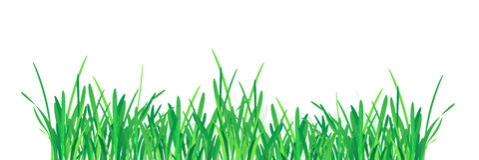 Green Grass Border. Vector Illustration for you design Stock Image