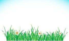 Green Grass Border. Vector Illustration for you design Stock Photos