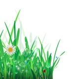 Green Grass Border. Vector Illustration for you design Stock Images
